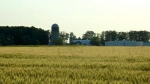 Wheat/Rye
